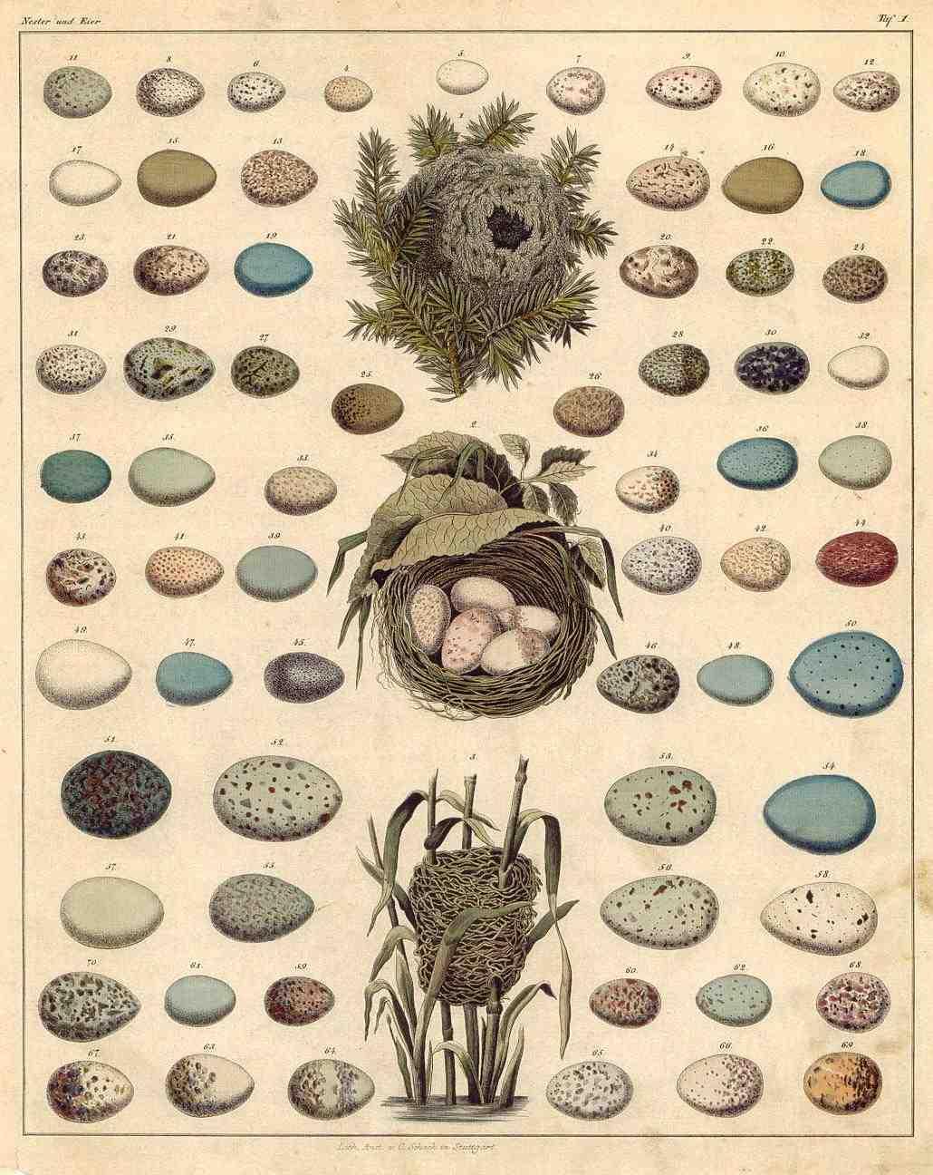atlas-ptacich-vajec